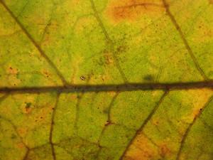 Leaves 29 Texture