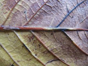 Leaves 46 Texture