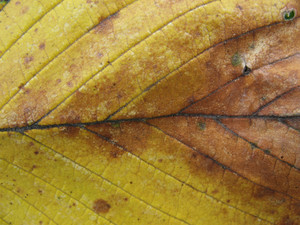 Leaves 49 Texture