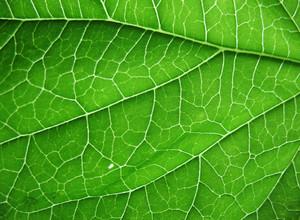 Leaves 5 Texture