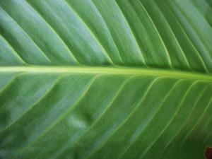 Leaves 66 Texture