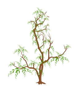 Leaves Branches Vector Design
