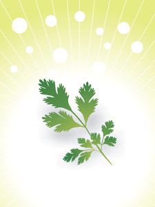 Leaves Of Coriander Illustration