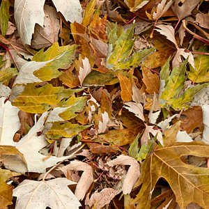 Leaves Seamless Texture
