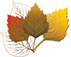 Leaves Vector Element