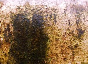 Lichen Texture 10