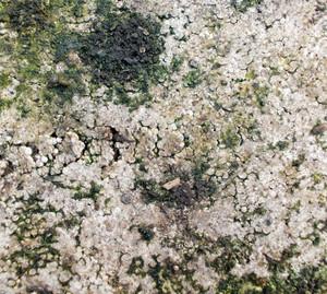 Lichen Texture 12