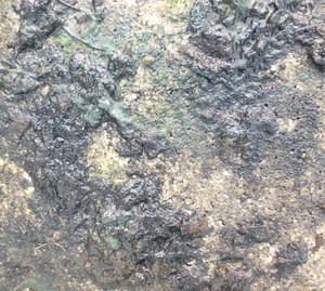 Lichen Texture 15