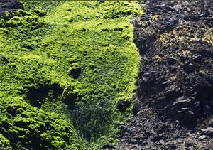Lichen Texture 3
