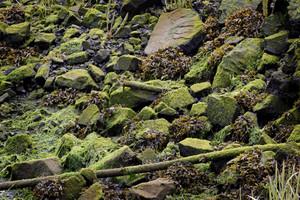Lichen Texture 4