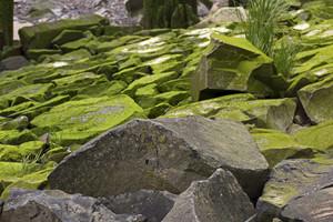 Lichen Texture 5