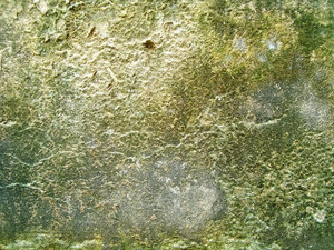 Lichen_and_moss_texture