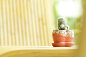 little cactus on wood table