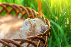 Little cute kitten sitting in a basket on the grass