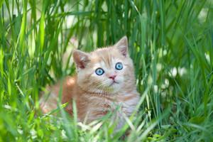 Little cute kitten sitting in the tall grass