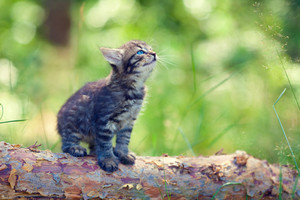 Little cute kitten sitting on the log
