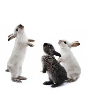 Little family rabbits on white