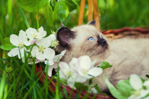 Little kitten in a basket on the grass with flowers