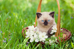 Little kitten in a basket on the grass