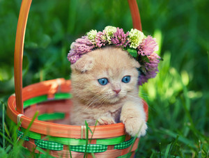 Little kitten in a basket with flower tiara