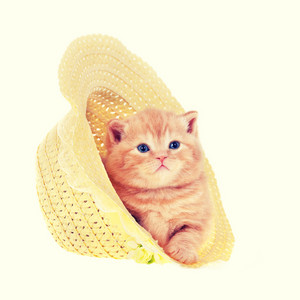 Little kitten in straw hat