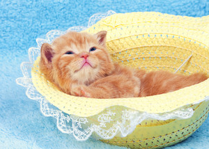Little kitten lying on the back in the straw hat