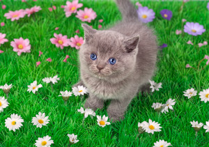 Little kitten on flower lawn