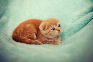 Little kitten on green blanket