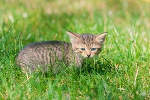 Little kitten on green lawn