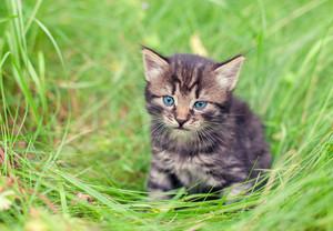 Little kitten sitting in a tall grass