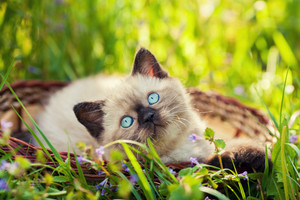 Little kitten sitting in the basket on the grass