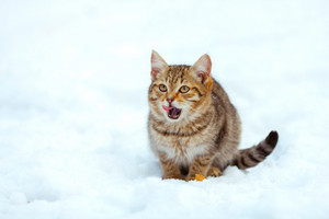 Little kitten sitting on the snow