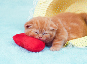 Little kitten sleeping in the straw hat on the heart-shaped pillow