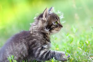 Little kitten sprinkled with dandelion seeds