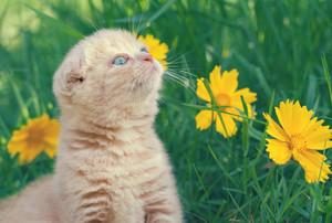 Little kitten walking in the garden