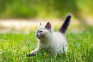 Little kitten walking in the grass