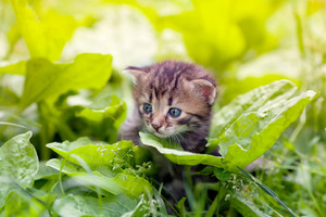 Little kitten walking on the plantain