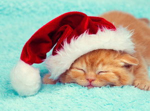 Little kitten wearing a santa hat sleeping on a blanket