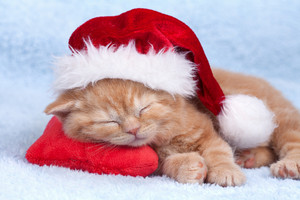Little kitten wearing a santa hat sleeping on a red pillow