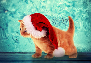 Little kitten wearing Santa hat against Christmas background with frosty pattern