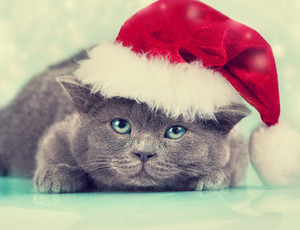 Little kitten wearing santa hat on Christmas background