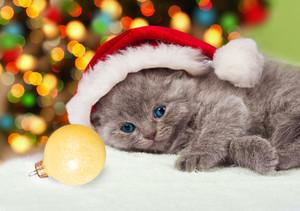 Little kitten wearing santa hat relaxing against Christmas tree with lights