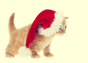 Little kitten wearing santa hat