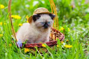 Little kitten wearing straw hat sitting in a basket on the grass