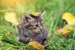 Little kitten with fallen leaf on the head sitting on the grass
