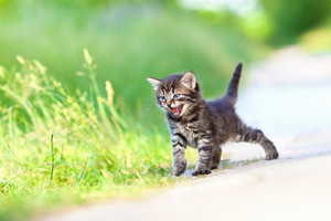 Little meowing kitten on the sandy road
