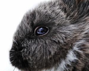 Little rabbit on white closeup eye