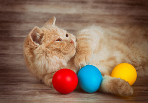 Little red kitten lying and dreaming with colored eggs