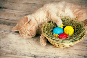 Little red kitten sleeping on the basket with colored eggs