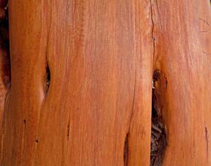 Lodgepole Wood